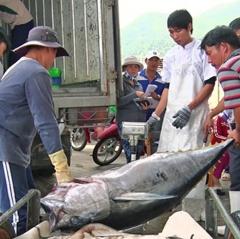 """Đề nghị EU sớm gỡ """"thẻ vàng"""" cho thủy sản Việt Nam"""