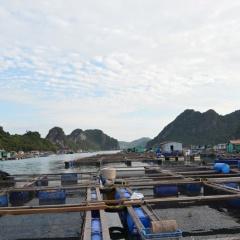 Cẩm Phả: Đảm bảo tiến độ quy hoạch nuôi trồng thủy sản
