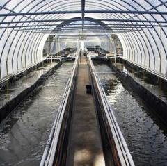 Độ mặn trong công nghệ biofloc nuôi tôm thẻ chân trắng