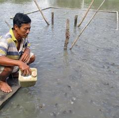 Đồng Tháp: Thủy sản nuôi được giá