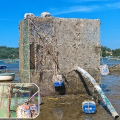Lợi ích nuôi tôm hùm bằng lồng lưới hợp kim đồng