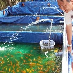 Xuất khẩu cá cảnh 2018 sẽ đạt hơn 20 triệu USD