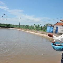 """Lão nông Ninh Bình kiếm tiền tỷ nhờ """"con trơn nhớt"""""""