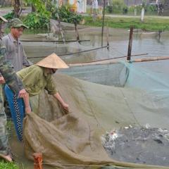 Kỹ thuật phòng bệnh cho cá nước ngọt trong giai đoạn chuyển mùa