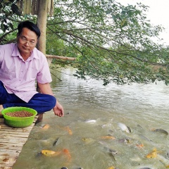 Lãi cao từ nuôi cá nhiều tầng