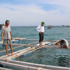 Những khuyến cáo hạn chế thiệt hại cá nuôi lồng bè ở Vĩnh Tân