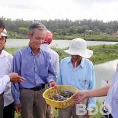 Bình Định: Mô hình nuôi cua xanh thương phẩm từ cua 1, cua 2