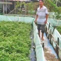Nuôi lươn không bùn kết hợp trồng rau thủy canh hiệu quả