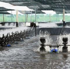 Bất cập trong quá trình nuôi tôm siêu thâm canh tại Cà Mau