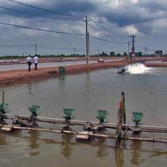 TP Hồ Chí Minh: Tình hình và giải pháp khuyến cáo nuôi thủy sản mùa mưa
