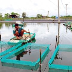 Bình Định: Không chủ quan với dịch bệnh trên tôm nuôi