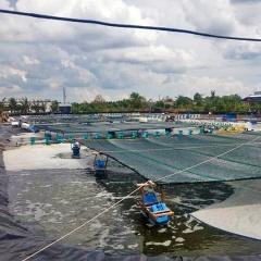 Phê duyệt Đề án Tổng thể phát triển ngành tôm nước lợ Việt Nam đến năm 2030