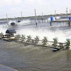 Mỹ Xuyên: Thu hoạch được gần 13.000 ha thủy sản