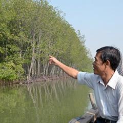 Bà Rịa - Vũng Tàu: Còn tình trạng chặt phá rừng ngập mặn nuôi thủy sản