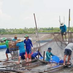 Khai thác cơ hội cá tra