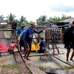 Tín hiệu tích cực của cá tra Việt Nam vào thị trường Mỹ