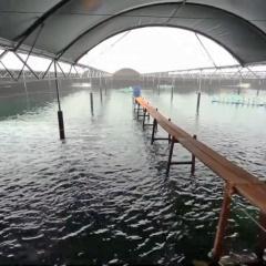 Thủy sản Trà Vinh: Đối lập sản lượng nuôi giữa các vùng nước