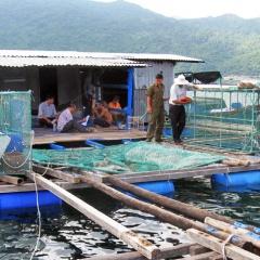 Gần nửa số lồng bè nuôi trồng thủy sản vượt quá quy hoạch
