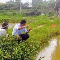 Hơn 21% diện tích tôm nuôi Sóc Trăng bị thiệt hại