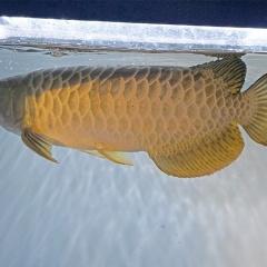 Chuỗi liên kết giá trị ngành cá cảnh TP Hồ Chí Minh