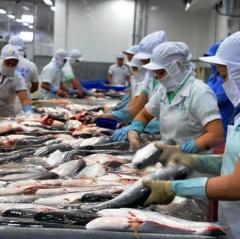 Giá cá tra tăng mạnh nhờ nhu cầu chế biến xuất khẩu