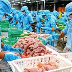 Hoãn các đơn đặt hàng cá tra để giá tại trại nuôi giảm bớt