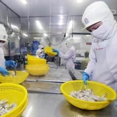 Giá tôm có thể hồi phục nhờ nhu cầu tăng từ Trung Quốc, EU