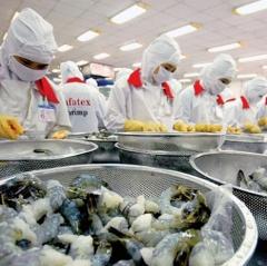 Xuất khẩu tôm Việt Nam hồi phục
