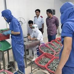 Vùng trọng điểm tôm Bạc Liêu: Cuộc chiến với tôm tạp chất
