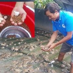 Kiếm gần nửa tỷ đồng mỗi năm nhờ trộn tỏi vào thức ăn ếch