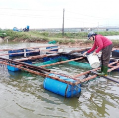 Huế: Nghiệm thu dự án thiết kế lồng nuôi cá quy mô nhỏ