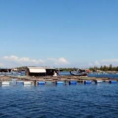 Triển khai quy hoạch phát triển thủy sản Khánh Hòa