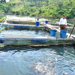 Nghề nuôi cá lồng đổi thay cuộc sống người dân vùng hồ