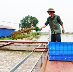 """Hiệu quả của 6 mô hình nuôi cá """"sông trong ao"""""""