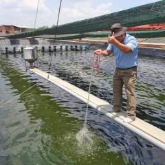 Cần Giuộc: Thu hoạch 1000 ha tôm với sản lượng đạt 2.400 tấn