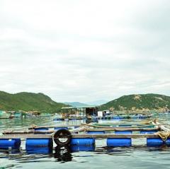 Khánh Hòa: Nhiều bất cập trong quy hoạch các vùng nuôi thủy sản