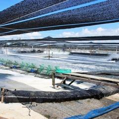Quảng Nam: 25 tỷ đồng đầu tư sản xuất giống theo tiêu chuẩn VietGAP