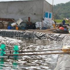 Thanh Hóa: Bảo đảm chất lượng thức ăn thủy sản