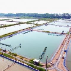 Tiền Giang: Bứt phá từ ngành Thủy sản