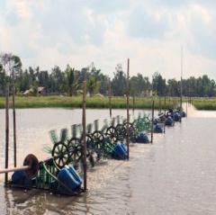 Trà Vinh: Duy trì trên 5.800 ha diện tích tôm rừng