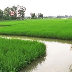 Nông dân Mỹ Xuyên nhận vốn vay thực hiện mô hình tôm-lúa