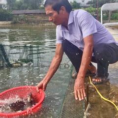 U70 với biệt tài ươm cá giống thu tiền tỷ