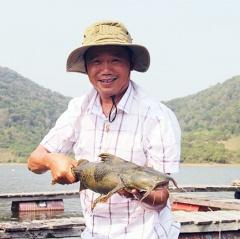 Cơ hội mới cho nuôi cá chiên thương phẩm