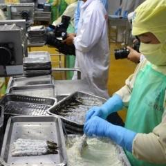 Cà Mau dẫn đầu cả nước về kim ngạch xuất khẩu tôm