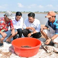 Giải pháp phòng chống dịch bệnh cá kèo