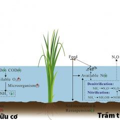 Tác động của lúa đến N2O và NH3 trong ao nuôi tôm cá