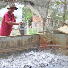 Nông dân Bình Định nuôi cá làm giàu