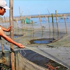 Nuôi cá mùa lũ: Không được chủ quan