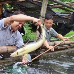 Mô hình nuôi cá tầm ở Bình Liêu