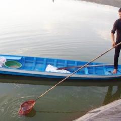 Quản lý chặt hoạt động ương cá tra giống ở Long An